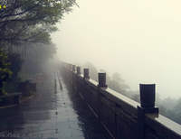 雨中梧桐山